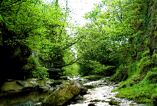 Peaceful Woodland Stream